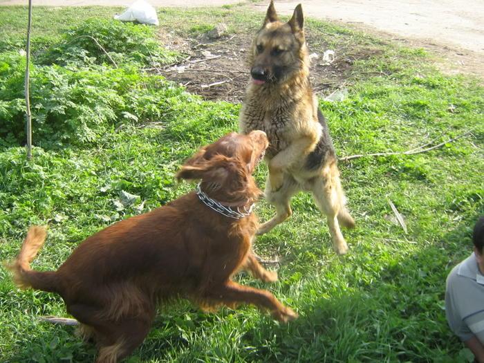 stachelhalsband für hunde